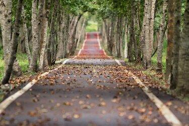 Alle facetten van herfst komen aan bod deze week